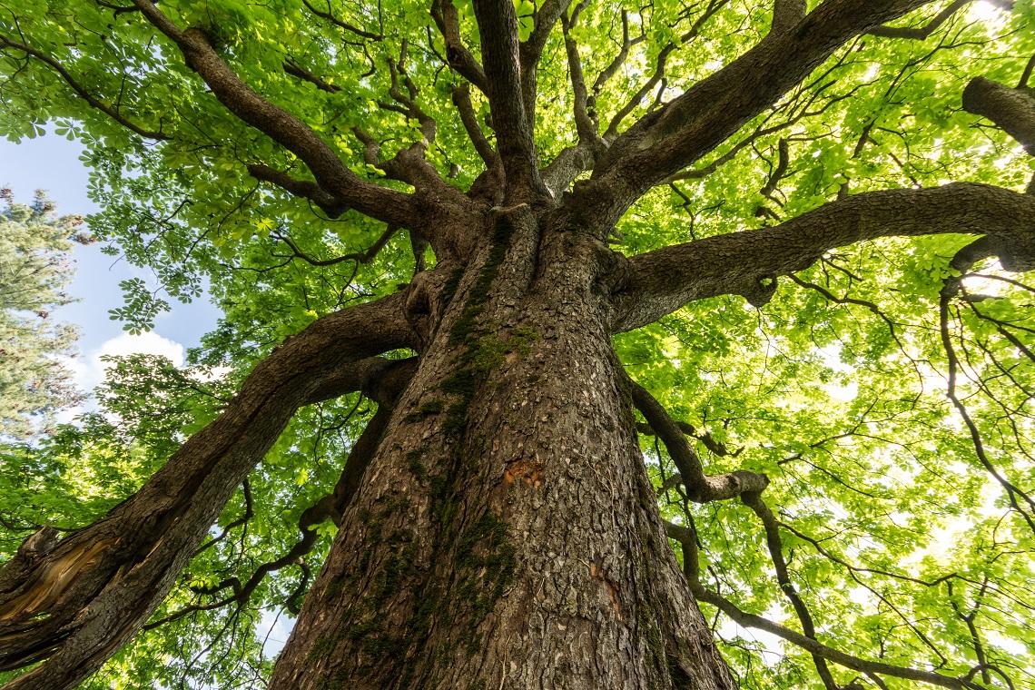 alberi poetici